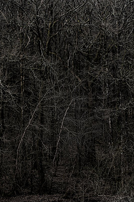 Kahle Bäume am Flussufer - p910m1195589 von Philippe Lesprit