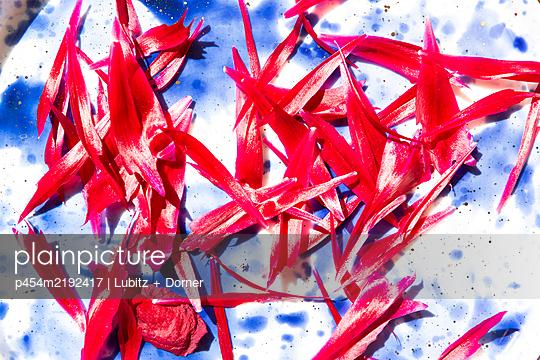 Petals - p454m2192417 by Lubitz + Dorner