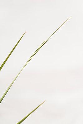 Blade of Grass - p1335m2082644 by Daniel Cullen