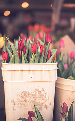 Tulips in Buckets at Seattle Market - p1617m2264077 by Barb McKinney