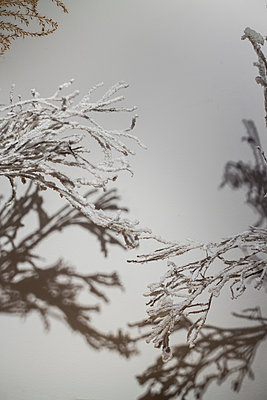 White branches - p1621m2228723 by Anke Doerschlen