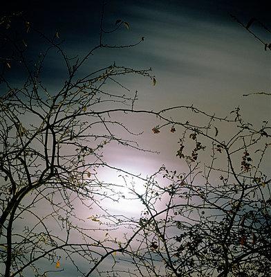 Zweige im Mondschein - p3880342 von Ulrike Leyens