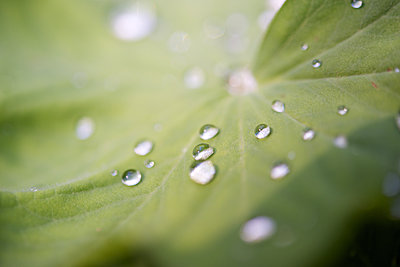 Close-up of dew drops on leaf - p624m1101458f by Odilon Dimier