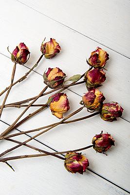 Getrocknete Rosen - p451m1559073 von Anja Weber-Decker