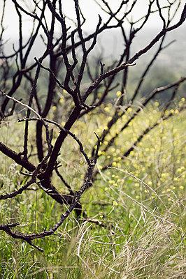 Waldbrand LA - p8000030 von Emma McIntyre