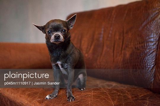 PET - p045m1110917 by Jasmin Sander