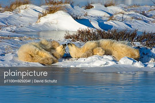 p1100m929204f von David Schultz