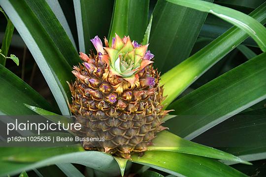 Blühende Ananas - p162m1025635 von Beate Bussenius