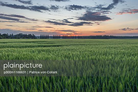 p300m1166631 von Patrice von Collani