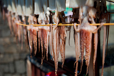 Squid hanging out to dry in Jeju Si on Jeju Island - p343m1067703f by Henn Photography