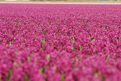 Blumenfelder - p4170015 von Pat Meise