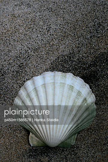 Seashell in the sand - p450m1586578 by Hanka Steidle