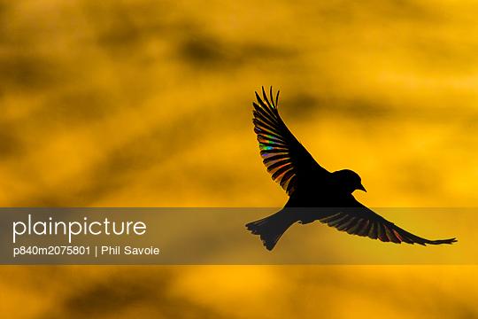 p840m2075801 von Phil Savoie