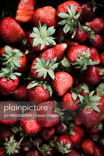 Red fresh organic strawberries. - p1166m2093959 by Cavan Images