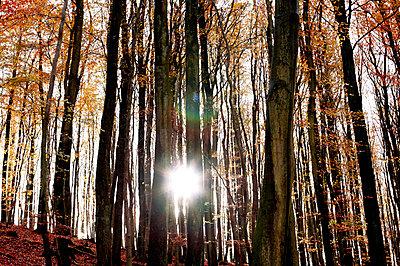 Wald - p2370472 von Thordis Rüggeberg