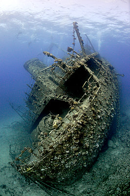 Giannis D shipwreck, Red Sea, Egypt - p884m1143146 by Dray van Beeck/ NiS