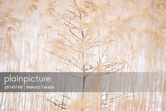 p5149746f von Makoto Takada