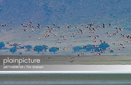 p871m838743 von Tim Graham