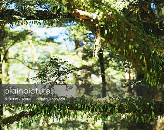 Neuseeland - p1016m792603 von Jochen Knobloch