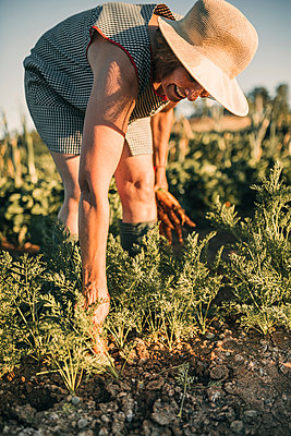 Female farm worker picking carrots at vegetable garden on sunny day - p300m2293552 by LUPE RODRIGUEZ