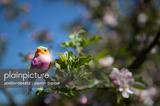 Vogel auf Zweig - p045m1564452 von Jasmin Sander