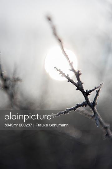 Frost - p949m1200287 von Frauke Schumann