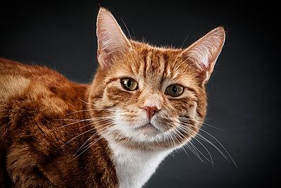 Portrait of a cat - p1156m1016926 by miep