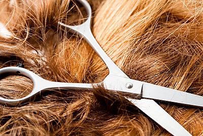 Hairdresser scissors with a bunch of cut hair - p1687m2295157 by Katja Kircher