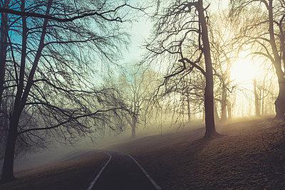 Sunrise and trees in a park, empty path - p300m2083268 by Dirk Wüstenhagen