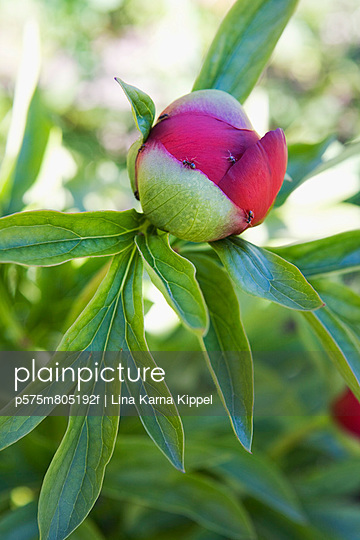 p575m805192f von Lina Karna Kippel
