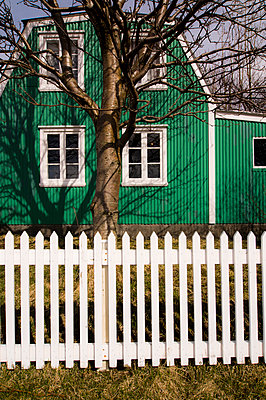 Green wooden house behind tree and white picket fence - p1047m1071887 by Sally Mundy