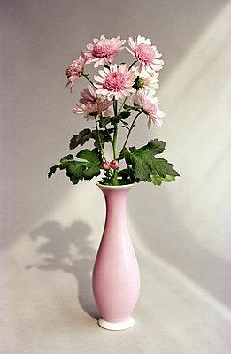 Rosa Vase, rosa Blumen - p1650022 von Andrea Schoenrock
