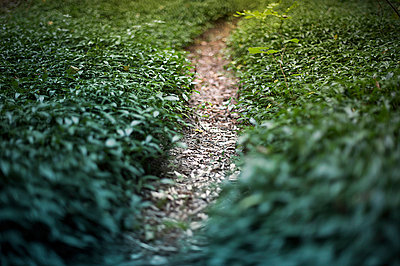 Small trail - p1007m854299 by Tilby Vattard