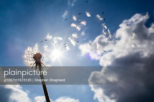 p1057m1573120 von Stephen Shepherd