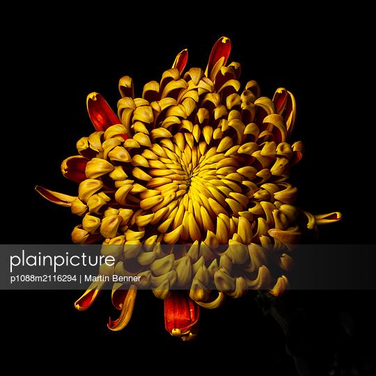 Yellow flower - p1088m2116294 by Martin Benner