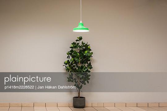 Plant bellow lamp - p1418m2228522 by Jan Håkan Dahlström