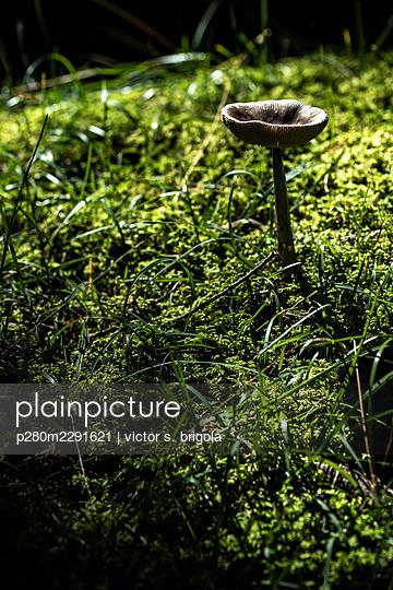 Mushroom - p280m2291621 by victor s. brigola