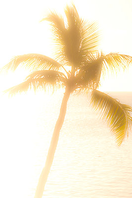 USA, Florida, Boca Raton, Silhouette of palm tree against sea at sunrise - p1427m2283088 by Tom Grill