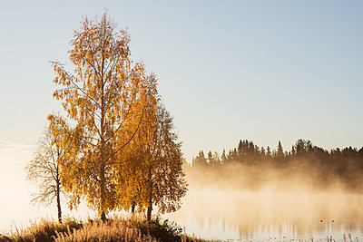 Autumn trees at lake - p312m2207715 by Hans Berggren