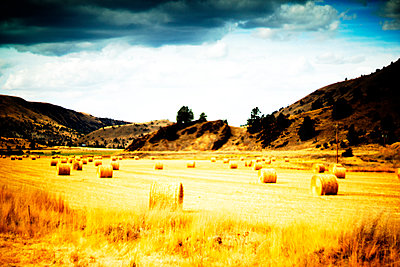 Hay Bale roles in Golden Landscape - p694m2218904 by Justin Hill photography