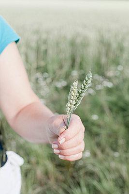 Wheat - p956m748741 by Anna Quinn
