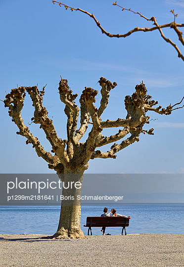 Gnarled tree on the shore, Lake Bodensee - p1299m2181641 by Boris Schmalenberger