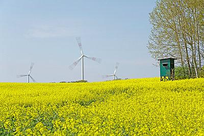Windkraftwerke im Rapsfeld - p021m908665 von Siegfried Kuttig