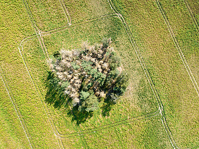 Dürre in Deutschland - p1079m2157733 von Ulrich Mertens