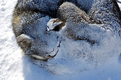 Nordland - p6520641 by Mark Hannaford
