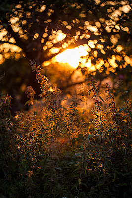 Sunset in Uckermark II - p941m907807 by lina gruen