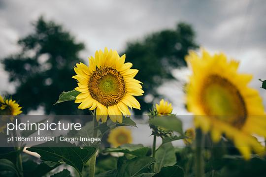 p1166m1182494 von Cavan Images