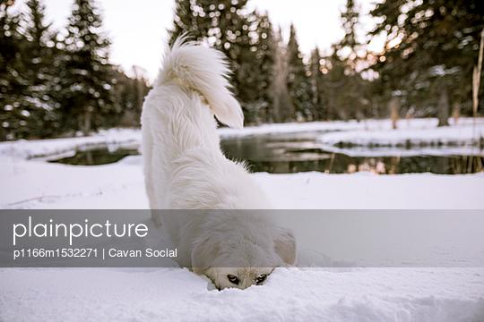 p1166m1532271 von Cavan Social