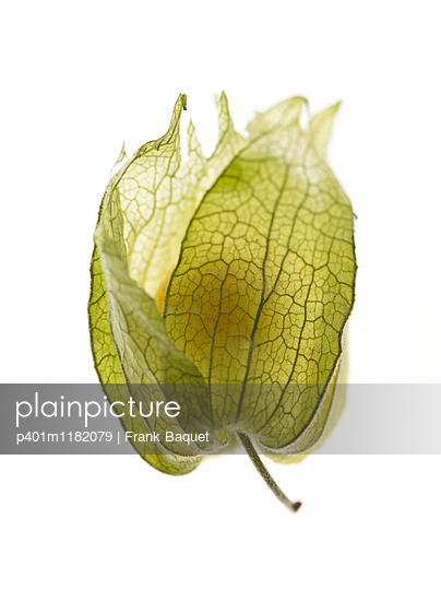 Physalis - p401m1182079 by Frank Baquet