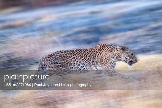 p651m2271084 von Paul Joynson Hicks photography